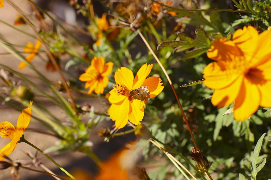 FlowerampButterfly_zps68a1b3d0.jpg