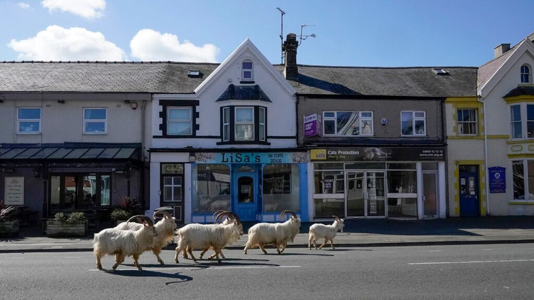 goats-Wales-Getty-Images.jpg