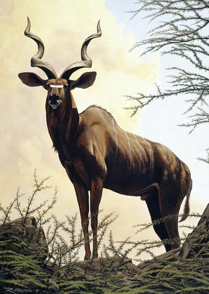greater-kudu-oil-on-canvas-16x24.jpg