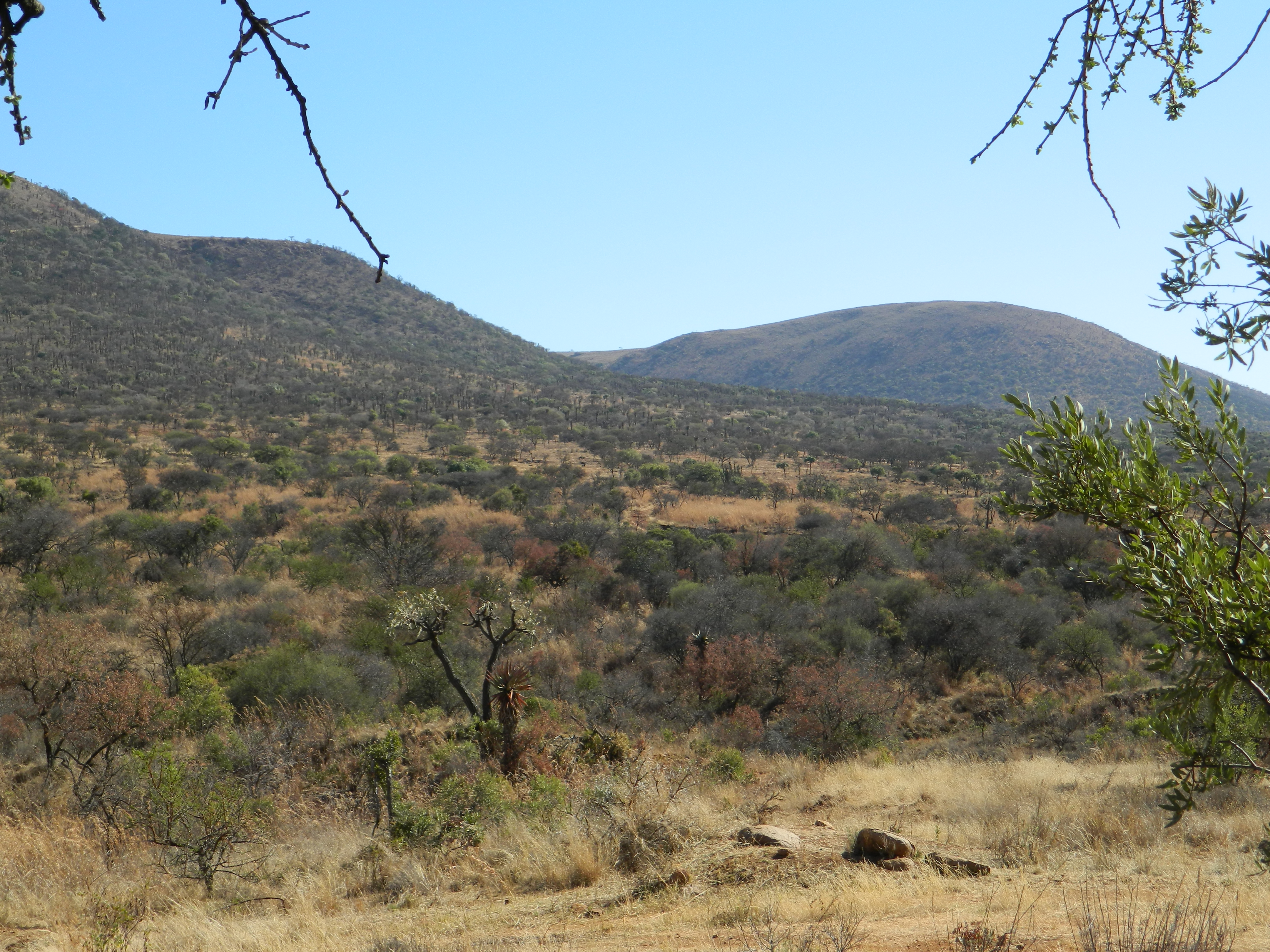 habitat (2).JPG