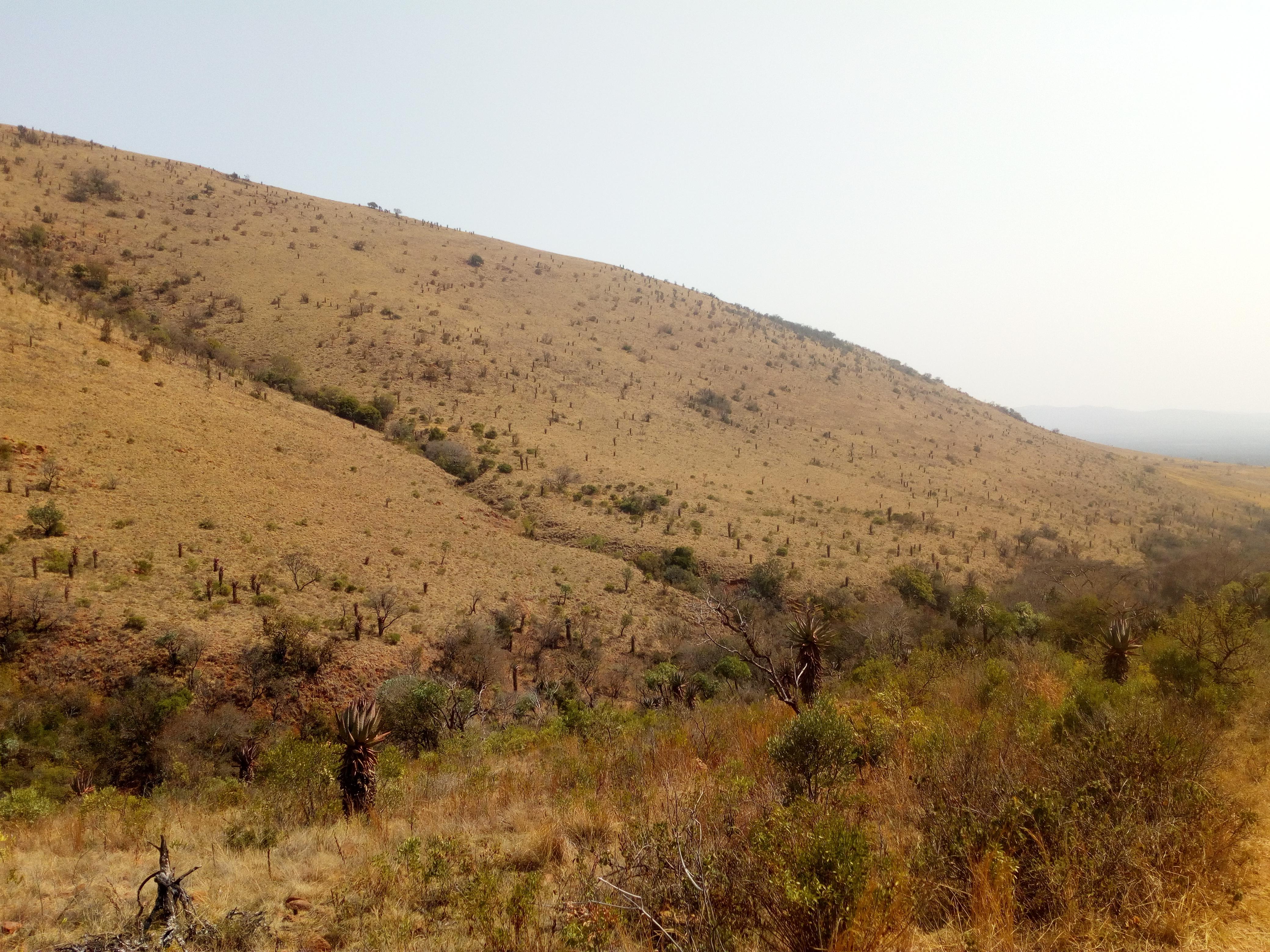 habitat (3).jpg