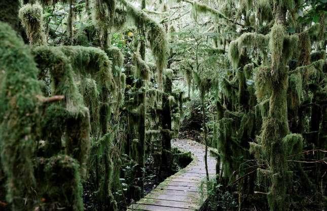 Haida Gwaii, British Columbia.2.jpg