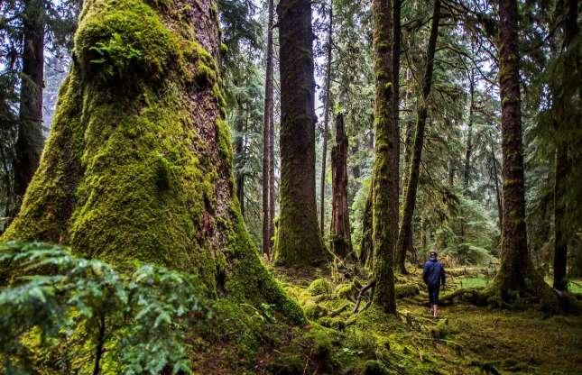 Haida Gwaii, British Columbia.3.jpg