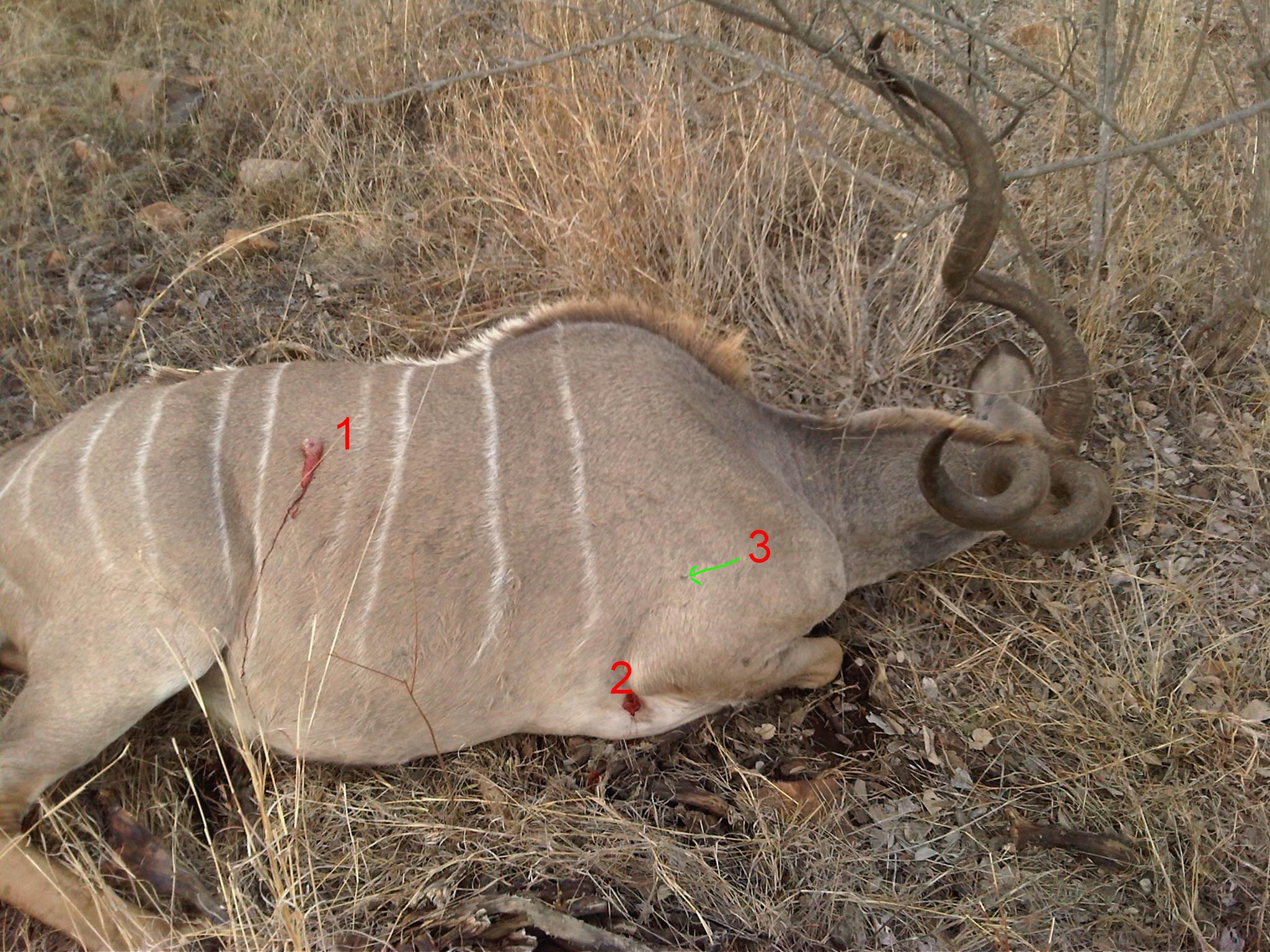 hits on kudu copy.jpg