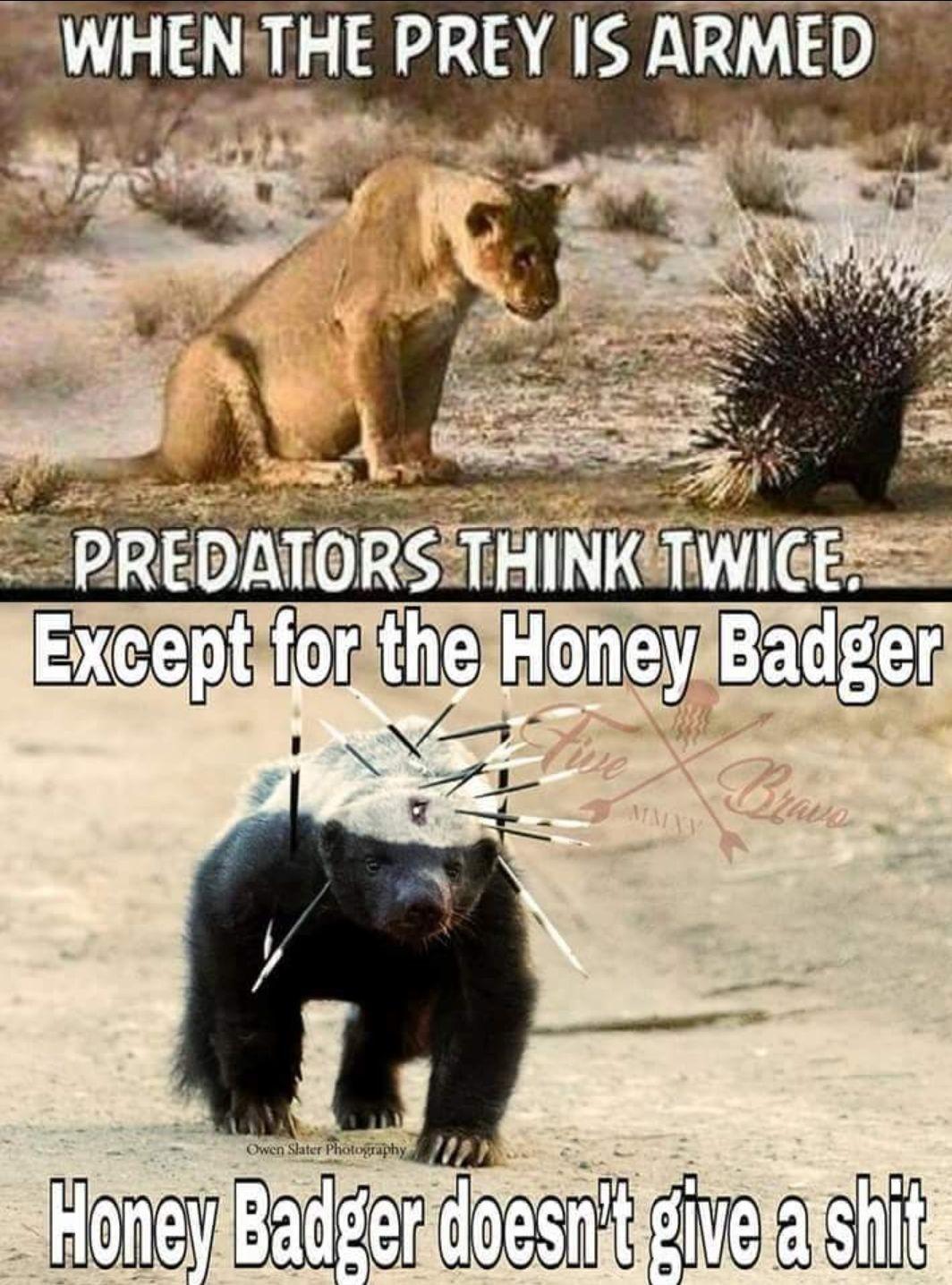 honeybadger don't care.jpg