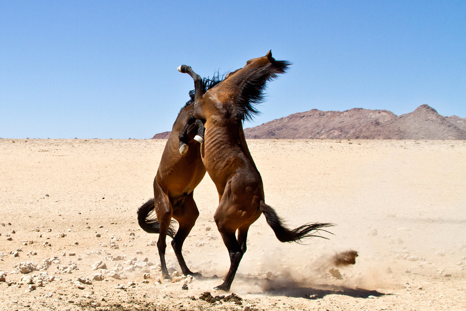 horses-fighting.jpg