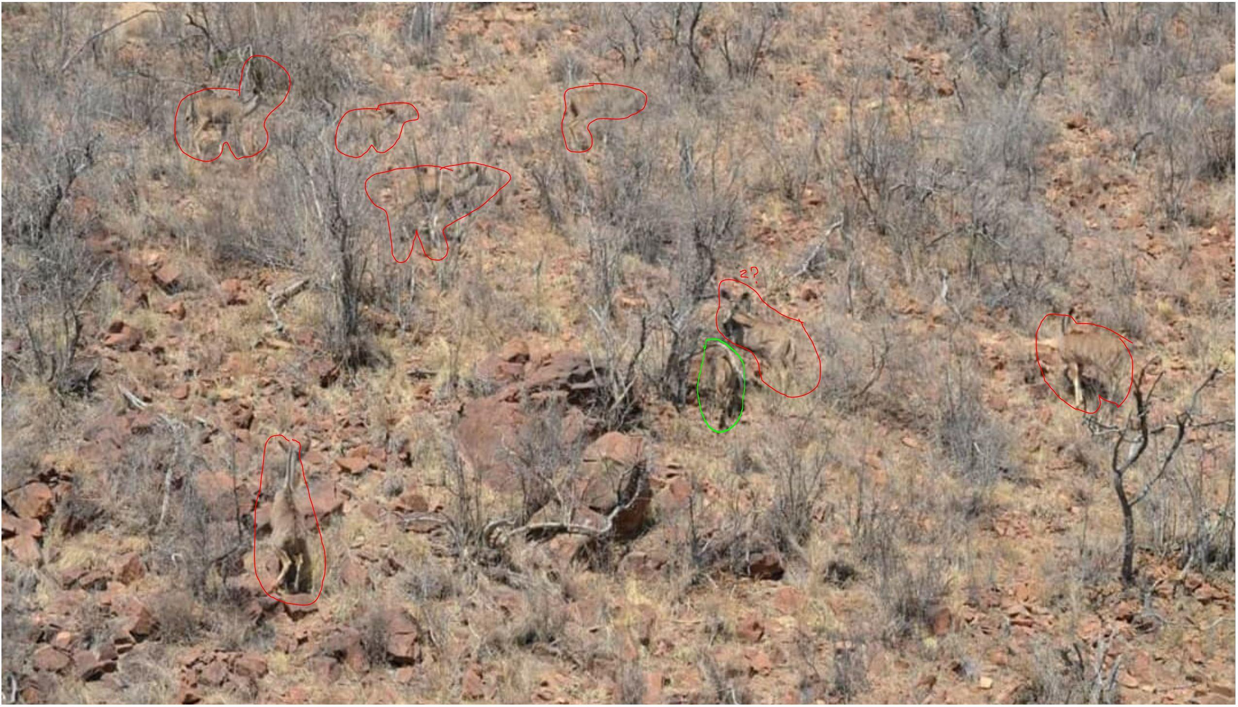 How_many_Kudu_in_photo_marked.jpg