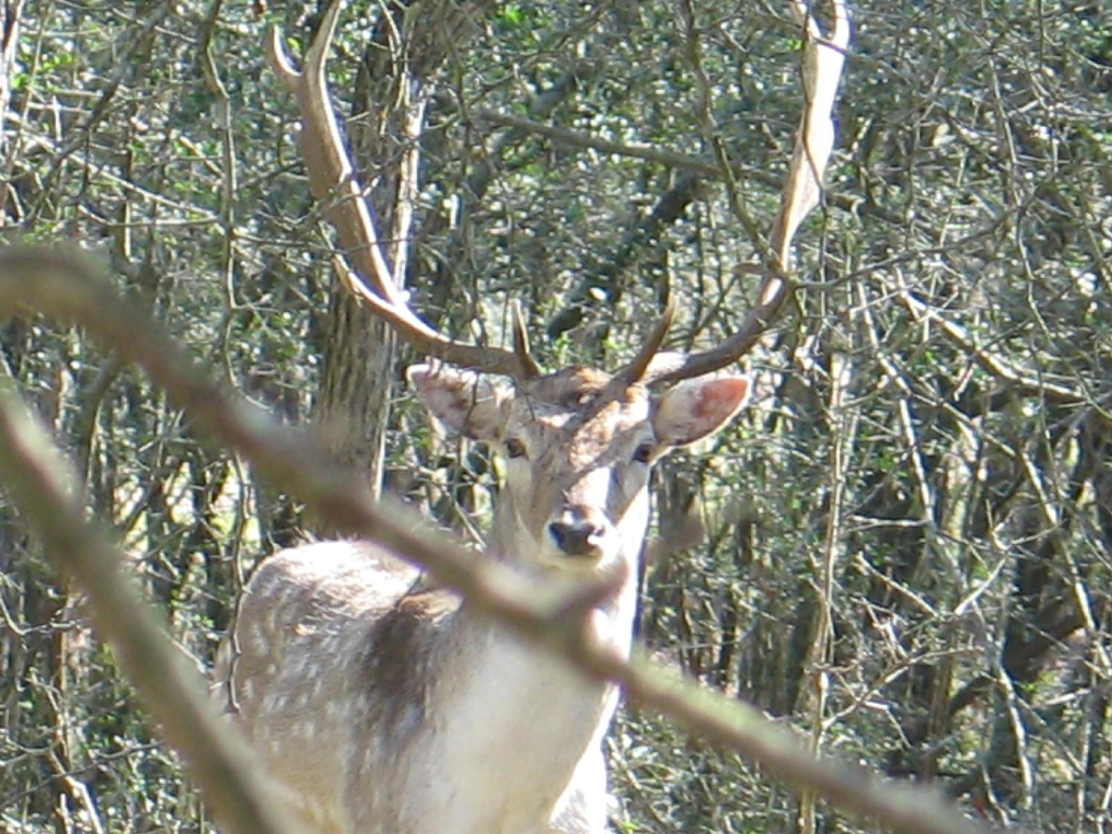 hunt circlee07 210.jpg