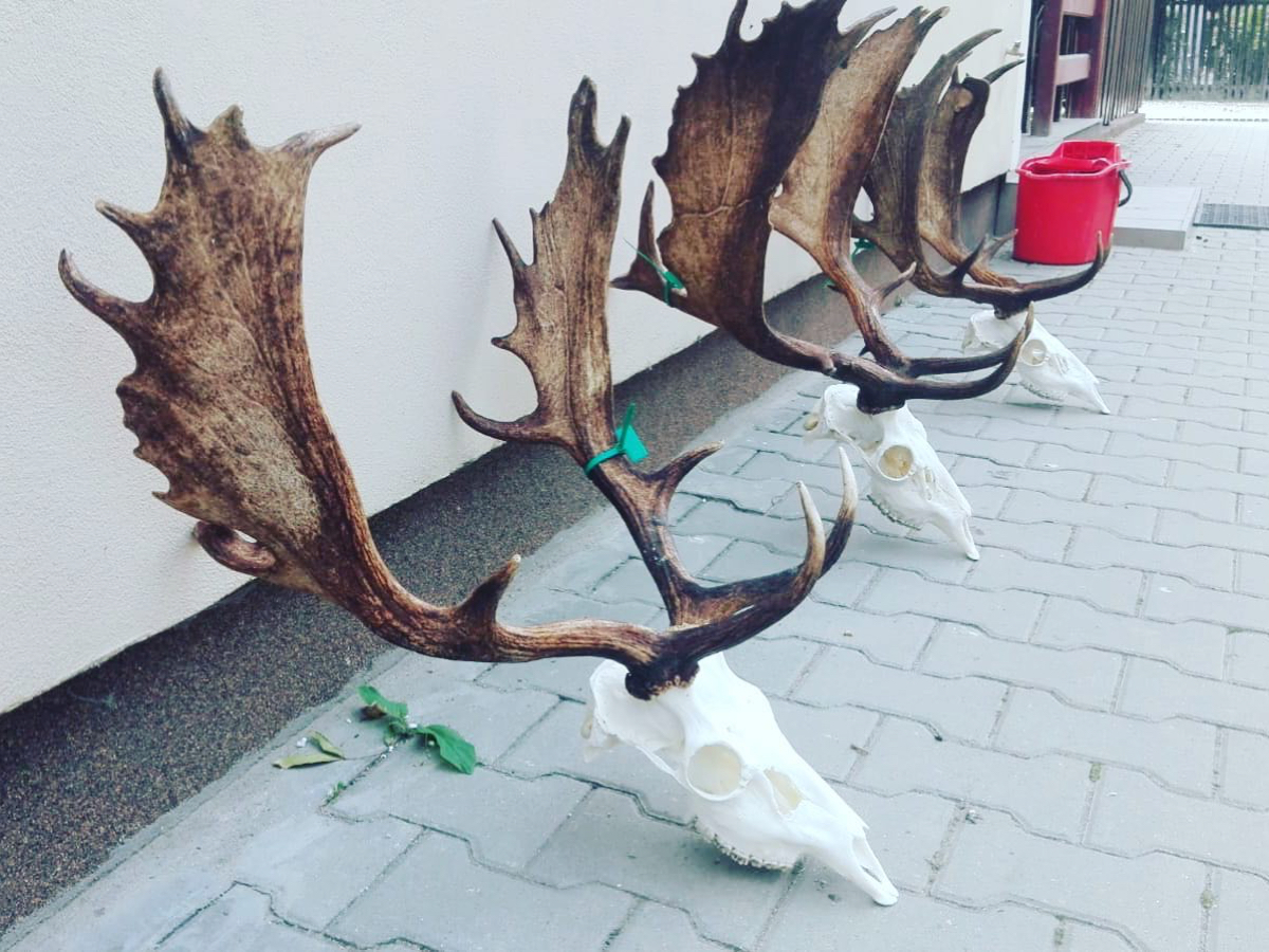 hunt-romania-25.jpg