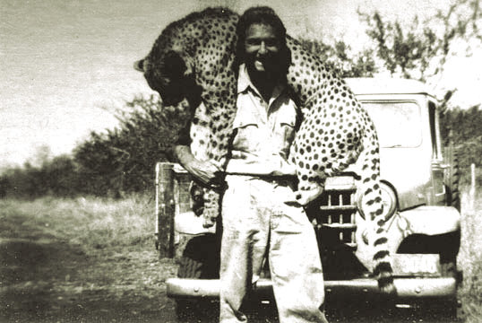Hunter with a large cheetah in Swaziland in 1950.jpg