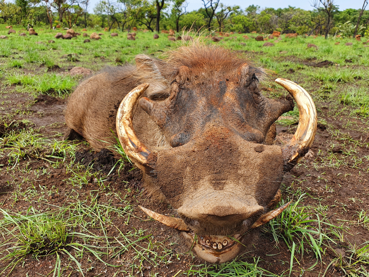 hunting-central-africa-29.jpg