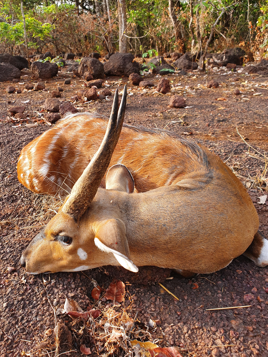 hunting-central-africa-42.jpg