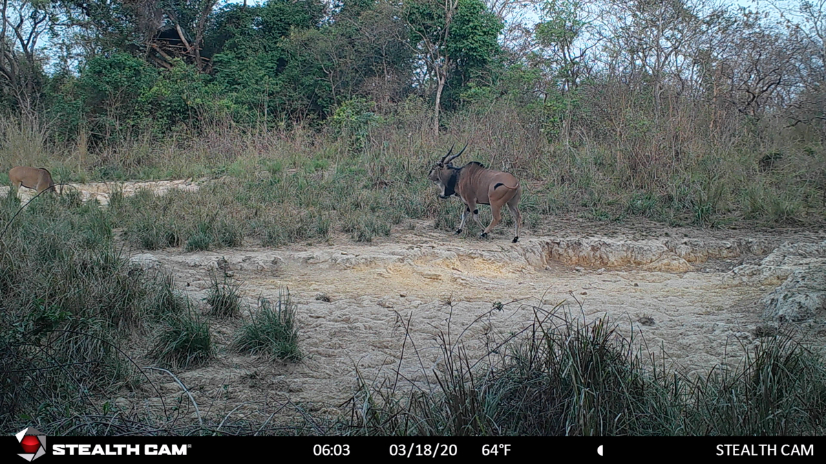 hunting-central-africa-52.jpg