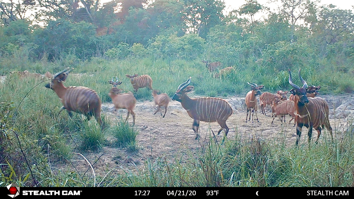 hunting-central-africa-54.jpg