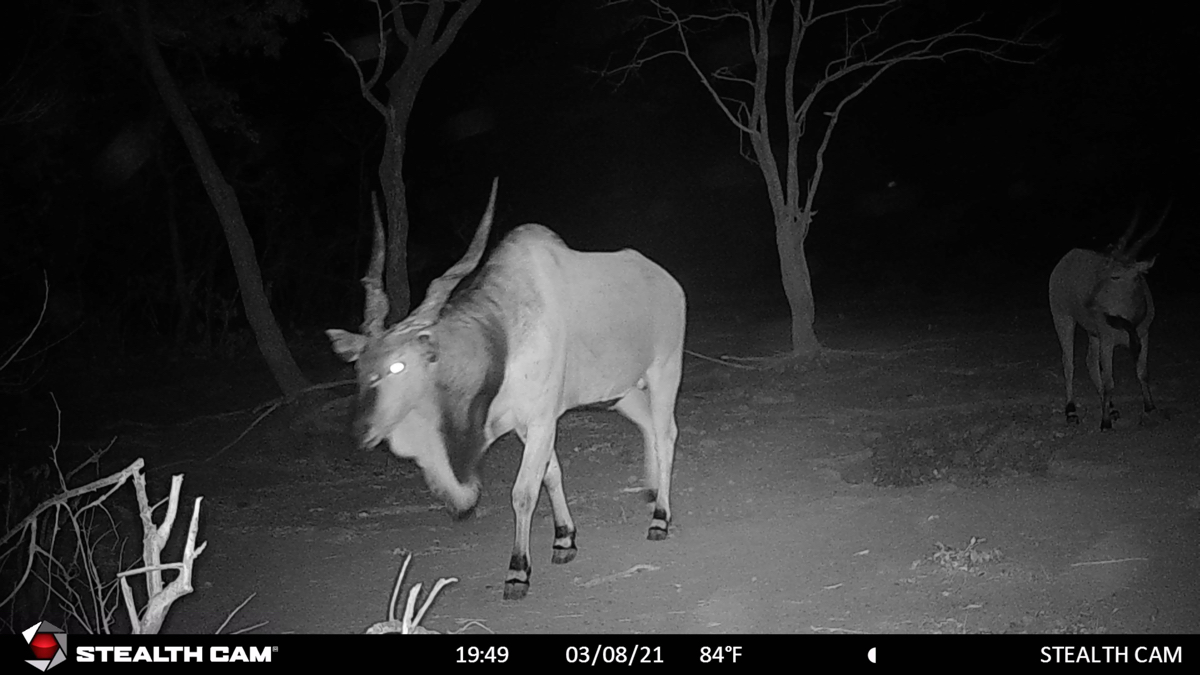 hunting-central-africa-56.jpg