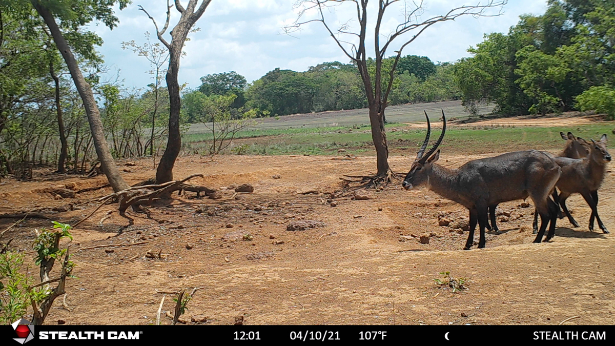 hunting-central-africa-61.jpg