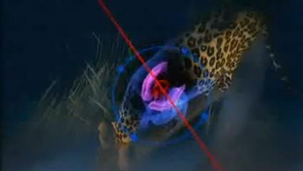 hunting-leopard-02.jpg