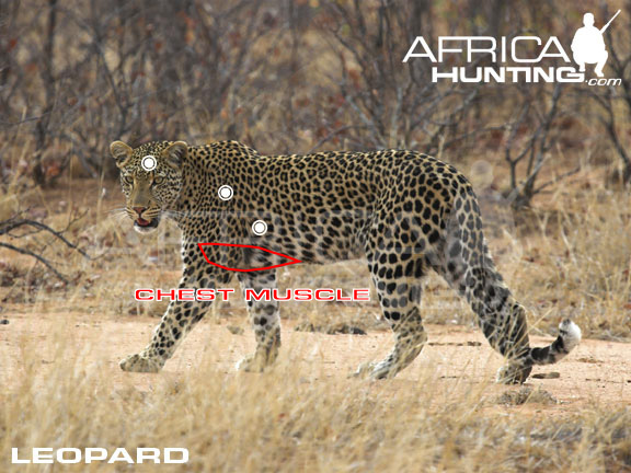 hunting-leopard.jpg