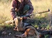 hunting_jackal-731d02f6.jpg