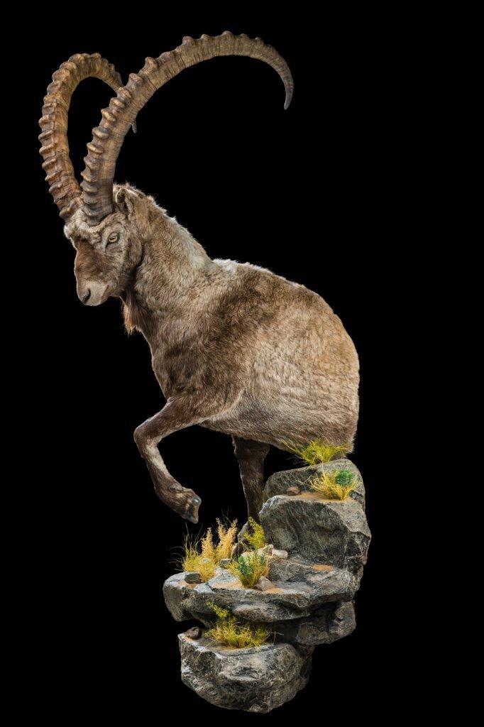 Ibex-Halfmount-HH075.jpg