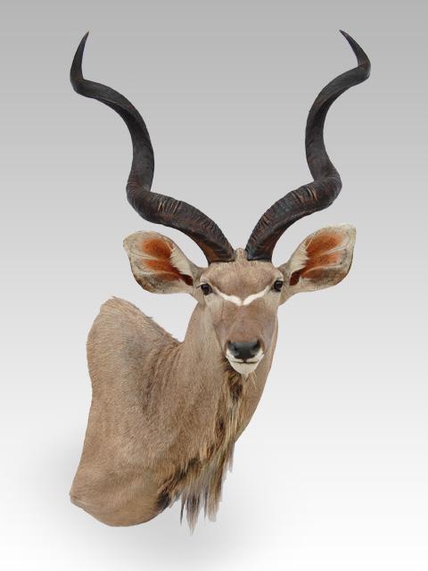 Kudu Mount Preference Hunting