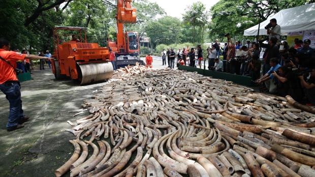 ivory-poaching.jpg