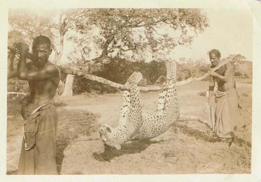 JFE Ceylon Hunt 0132 Leopard Front 001 (2).jpg