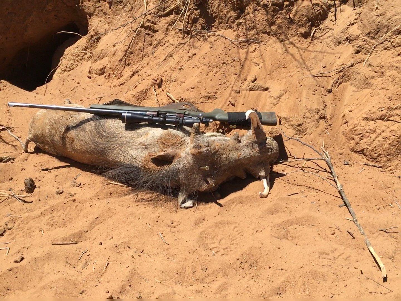 Keiler Namibia.jpg