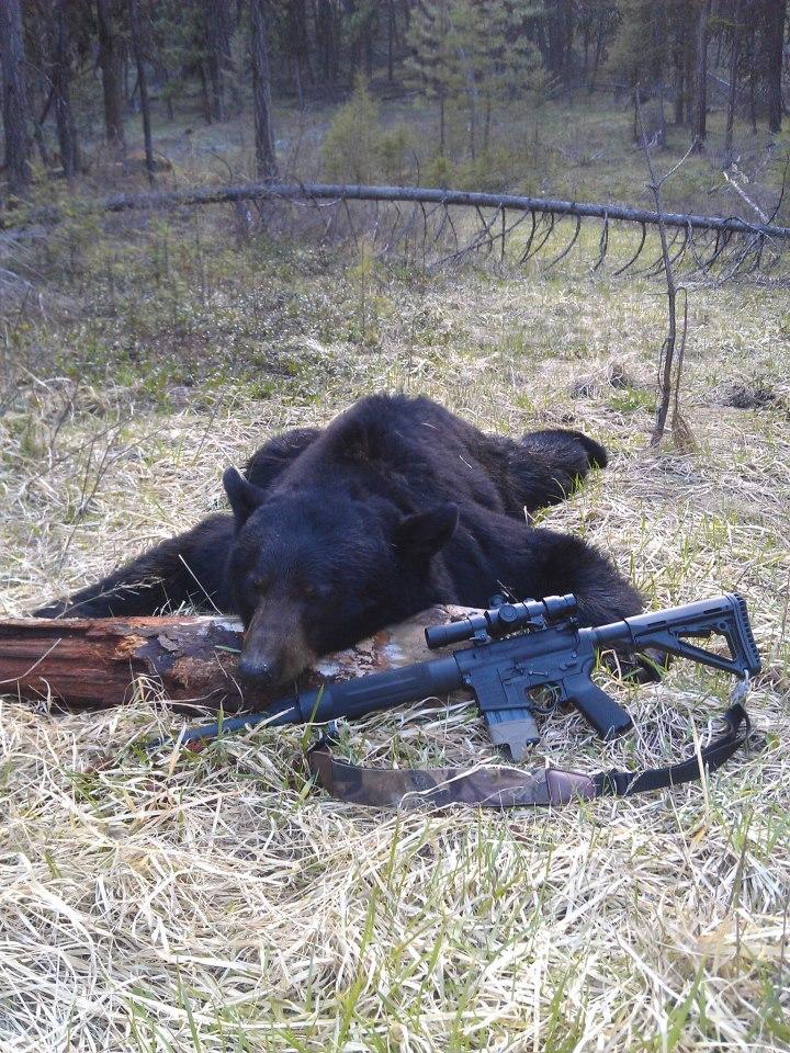 kelley\'s 2013 bear.jpg