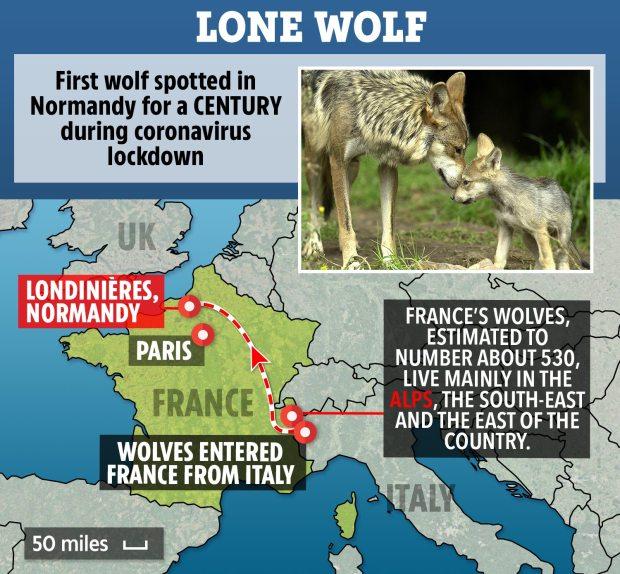 KH-MAP-FRANCE-LONE-WOLF.jpg