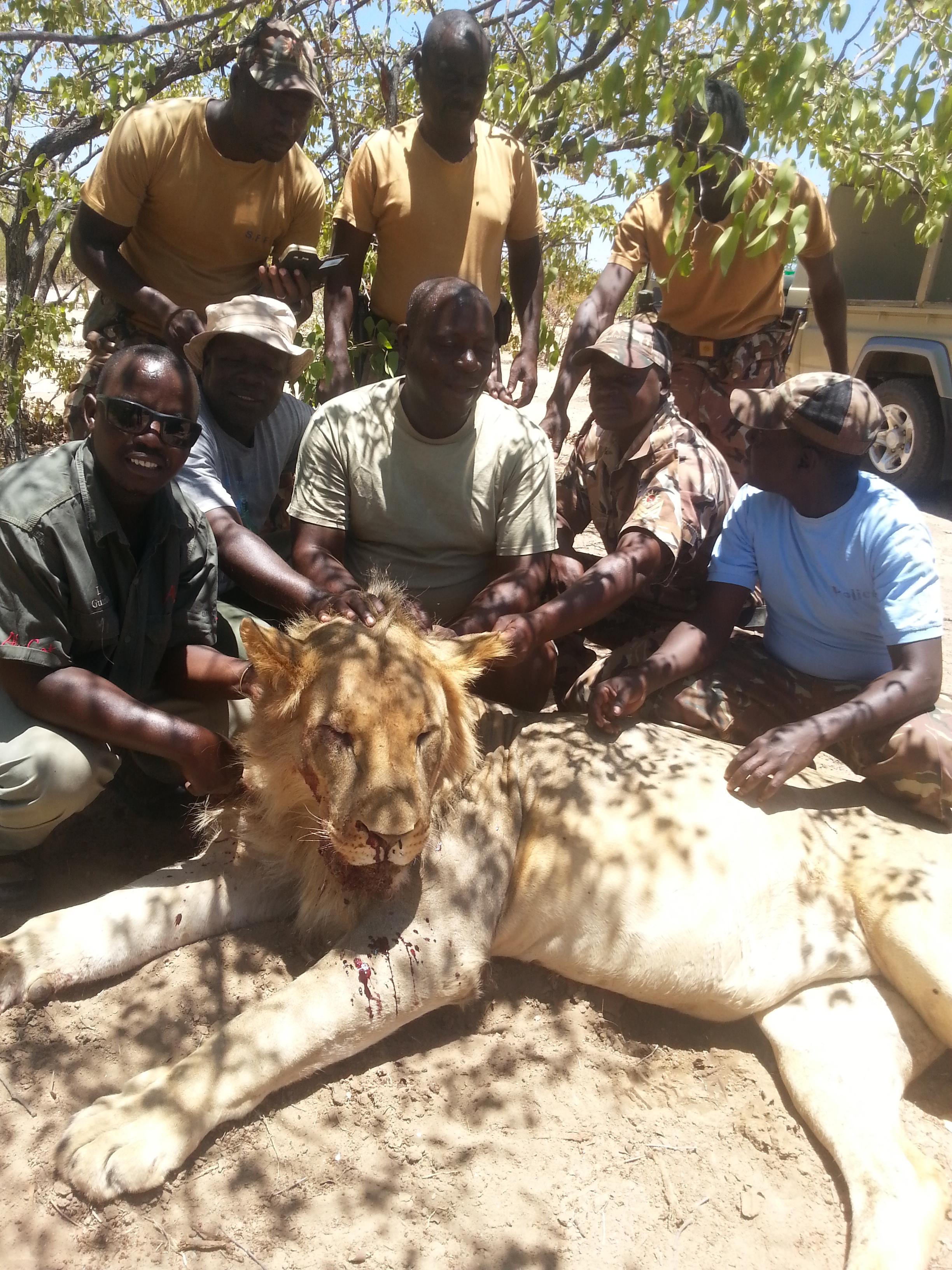 Killed-Lion.jpg