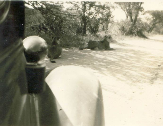 Kruger-1953-.jpg