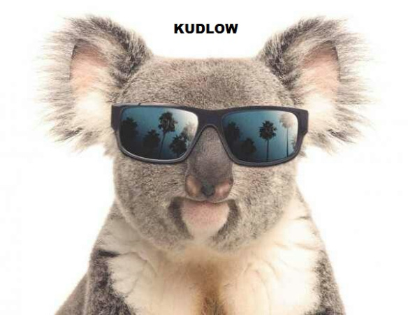kudlow-koala.jpg
