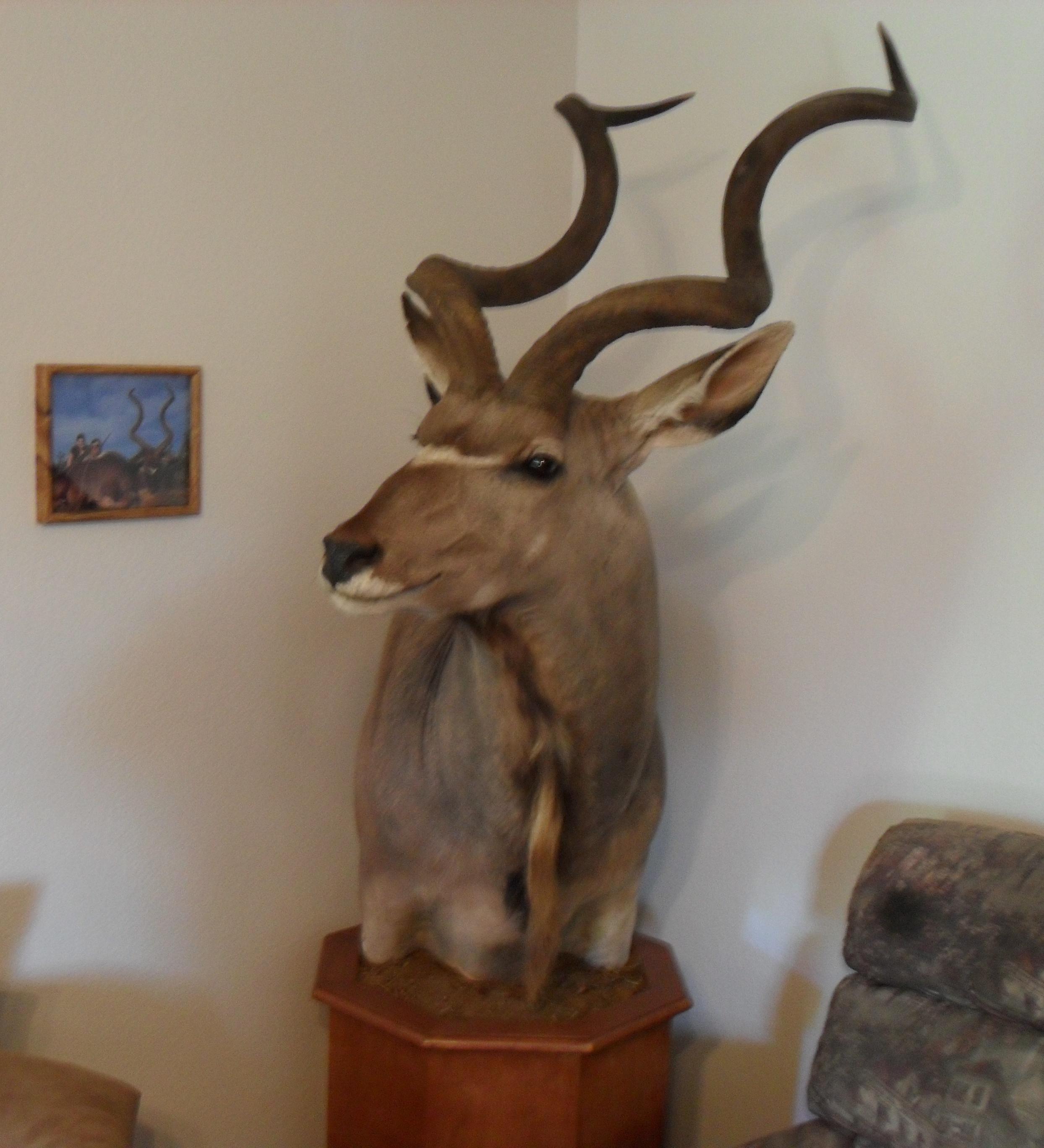 kudu 014.JPG