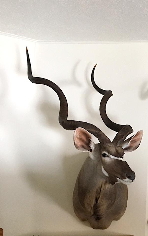 kudu angle.png