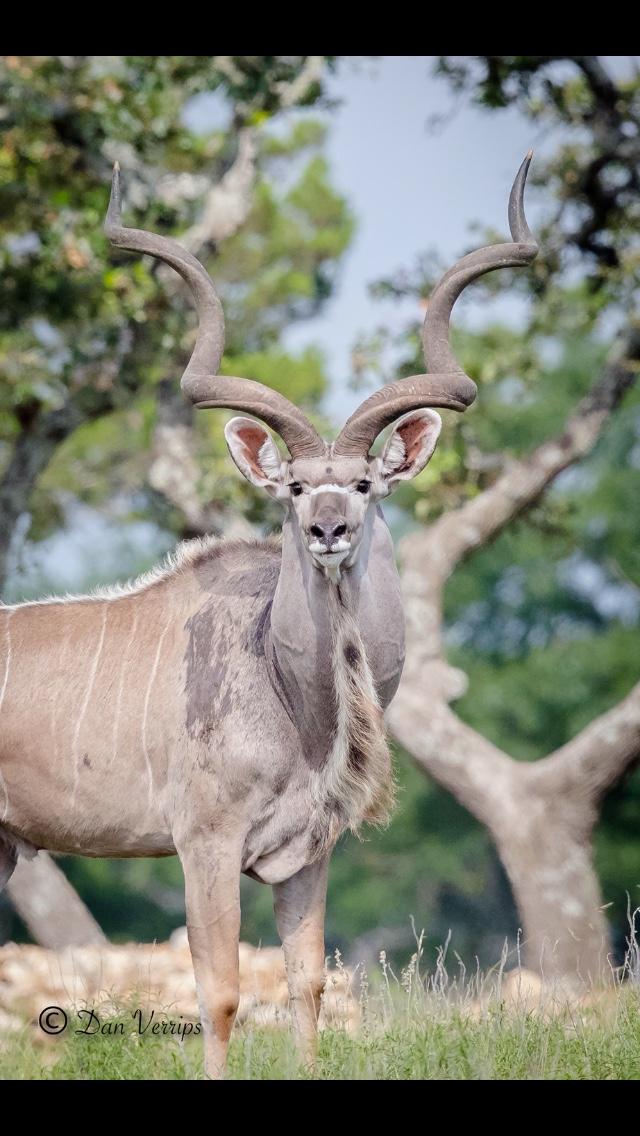 kudu breeder.jpg