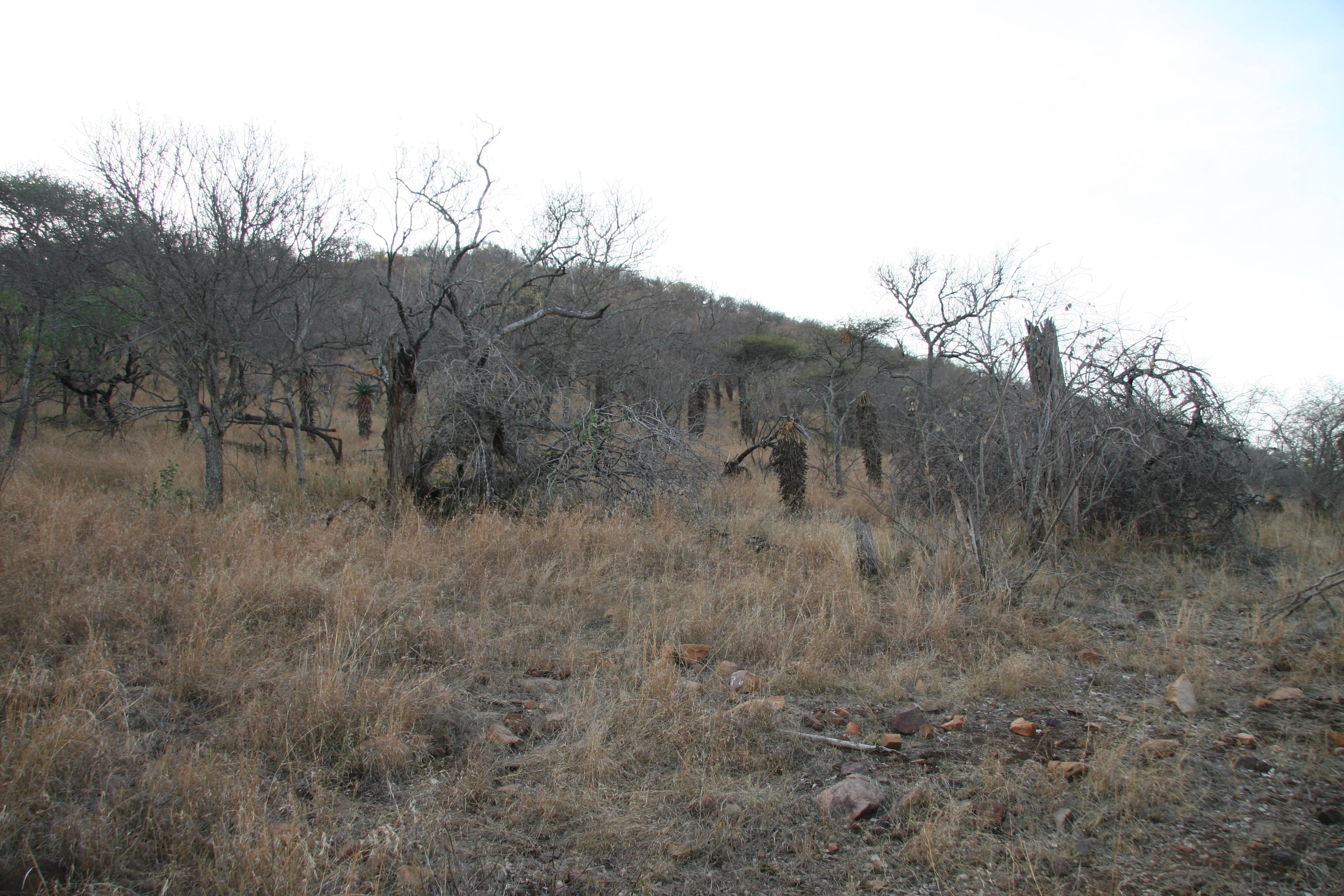 kudu clearing.jpg