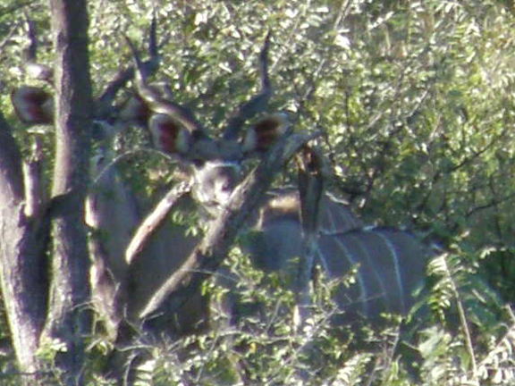 kudu-close-up.jpg