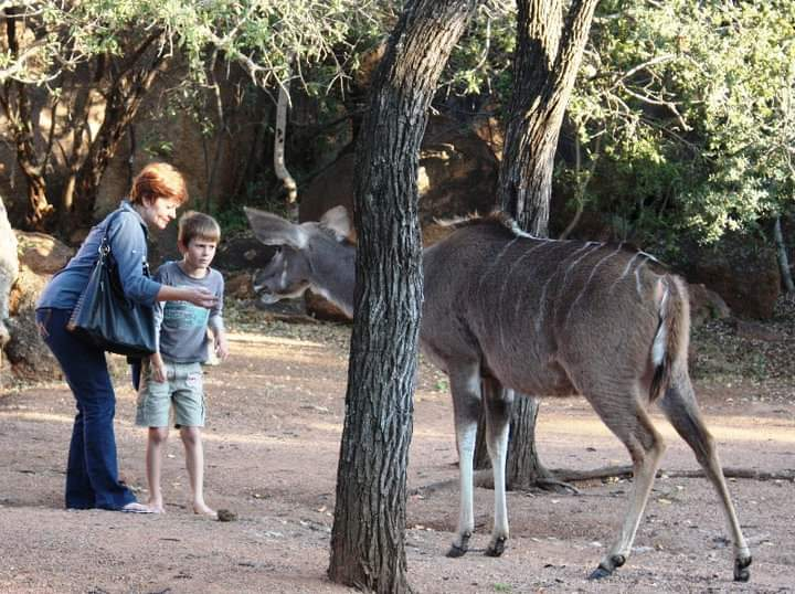 Kudu cow Dikhololo.jpg
