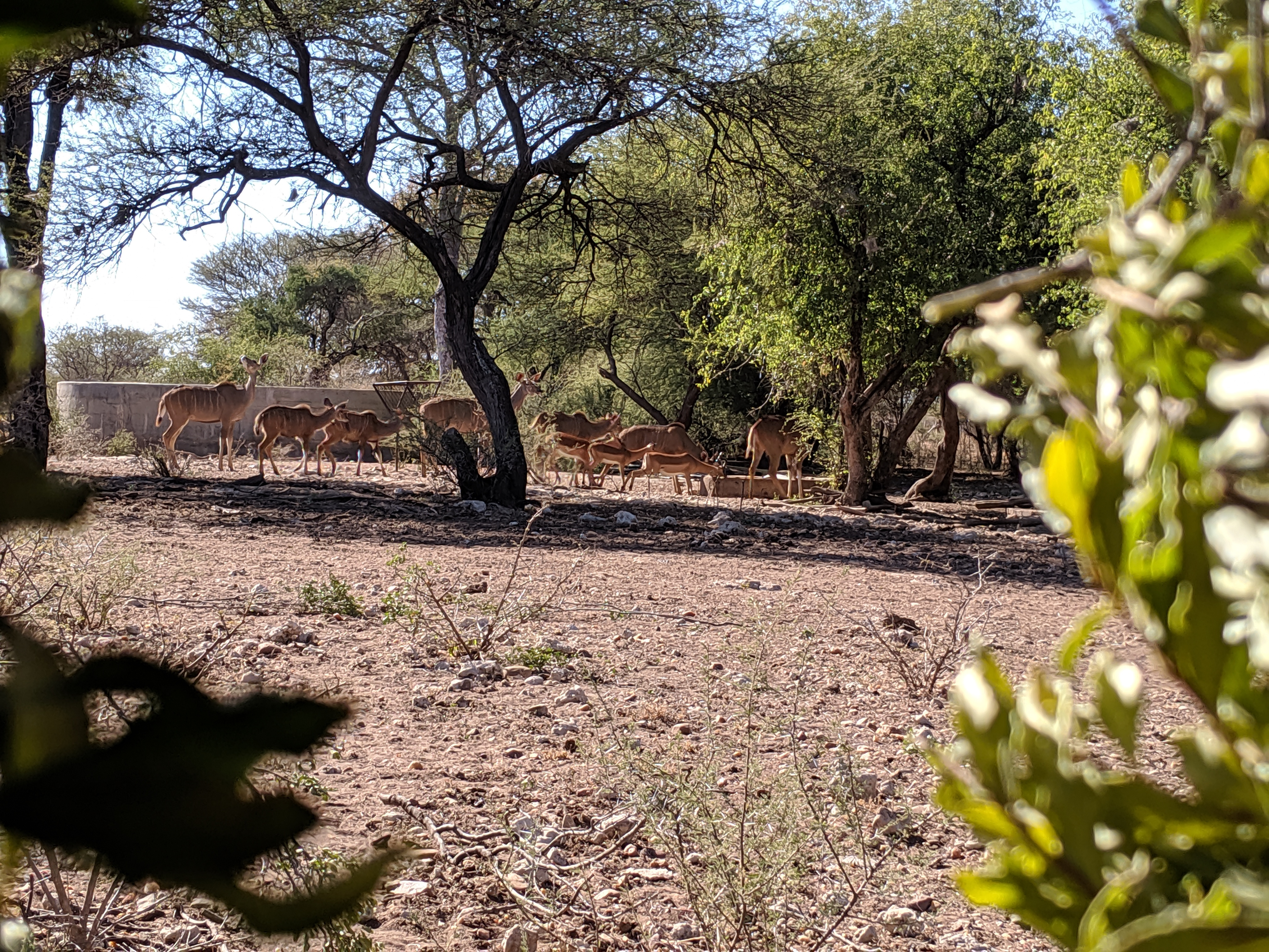 kudu impala.jpg