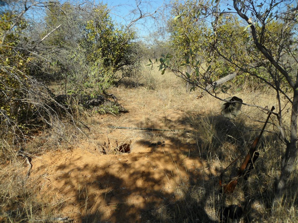 Kudu in bush.jpg