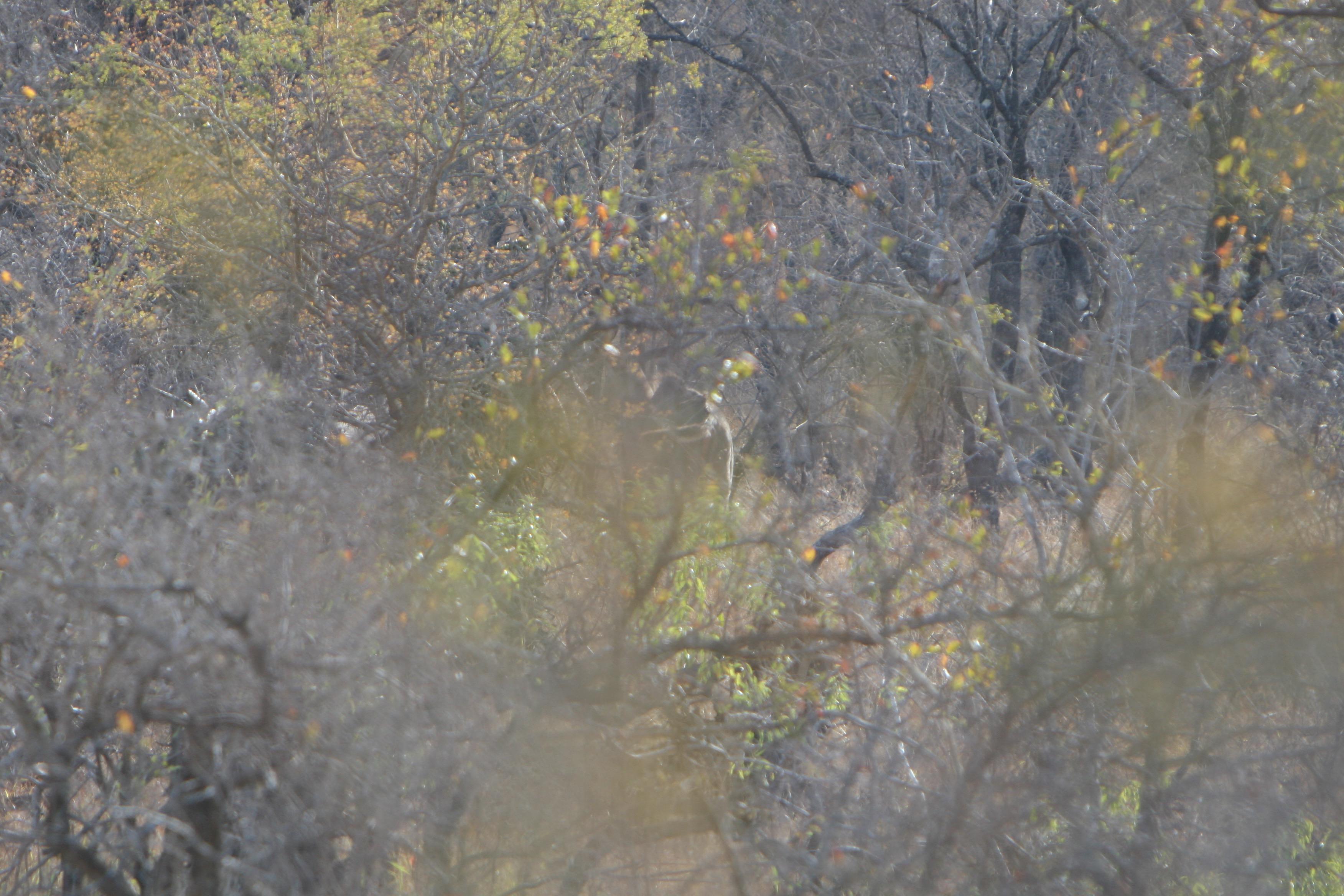 kudu in cover.jpg