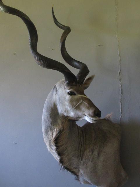 Kudu Mount.jpg