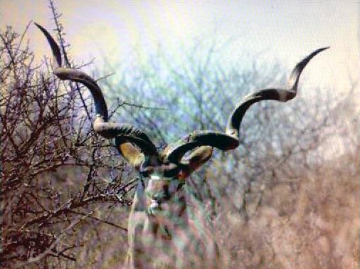 Kudu-record-SA.jpg