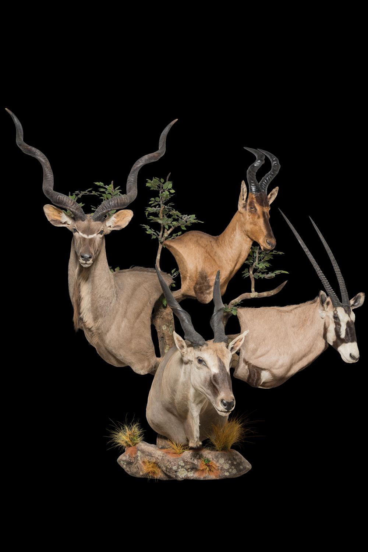 Kudu-Red-Hartebeest-Gemsbuck-Eland-Wall-Pedestals-Custom-Base-FF418-2.jpg