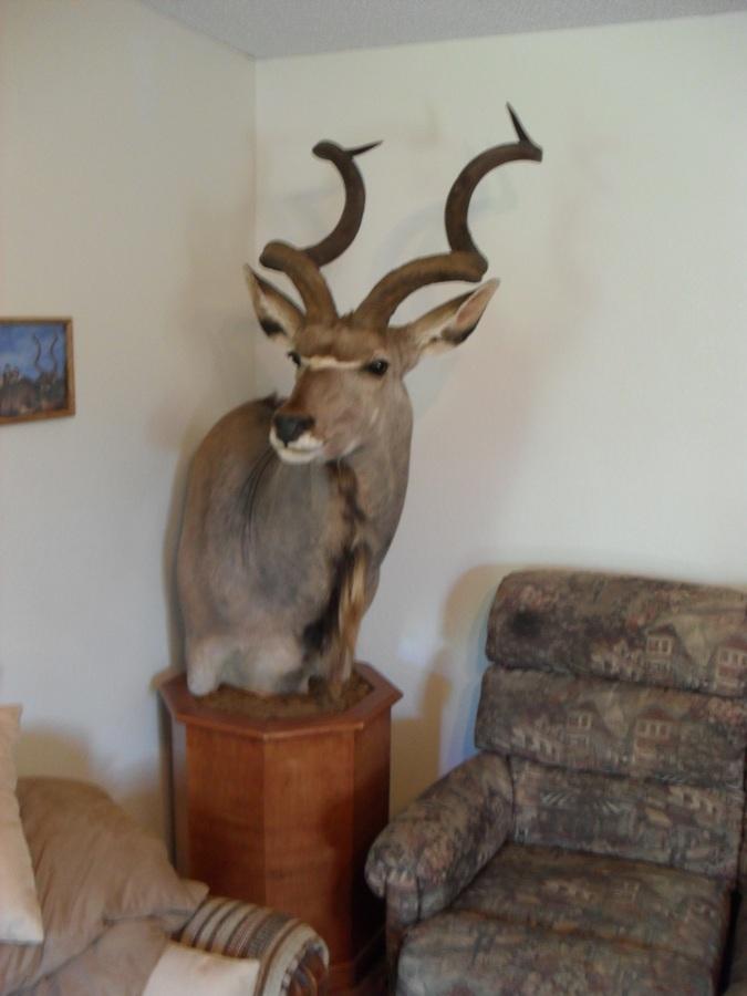kudu reduced.JPG