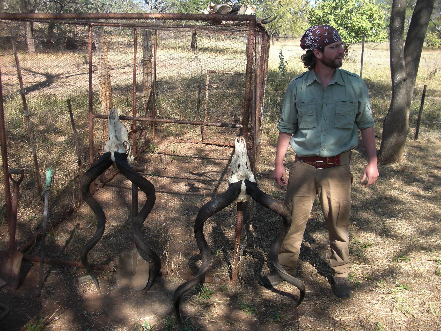 kudu skulls.jpg