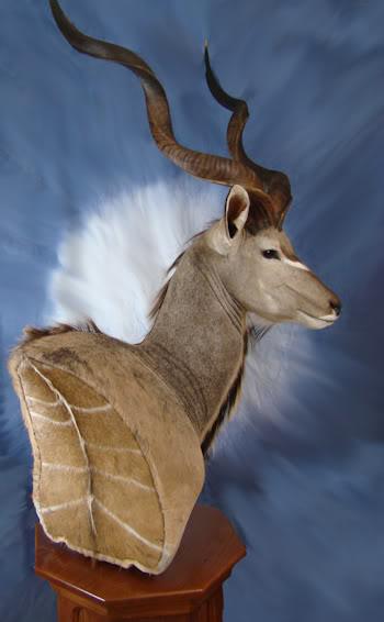 Kudu5.jpg