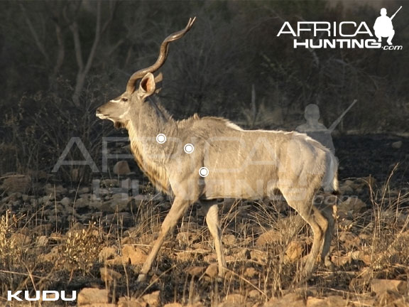 kudu_perfect_shot.jpg