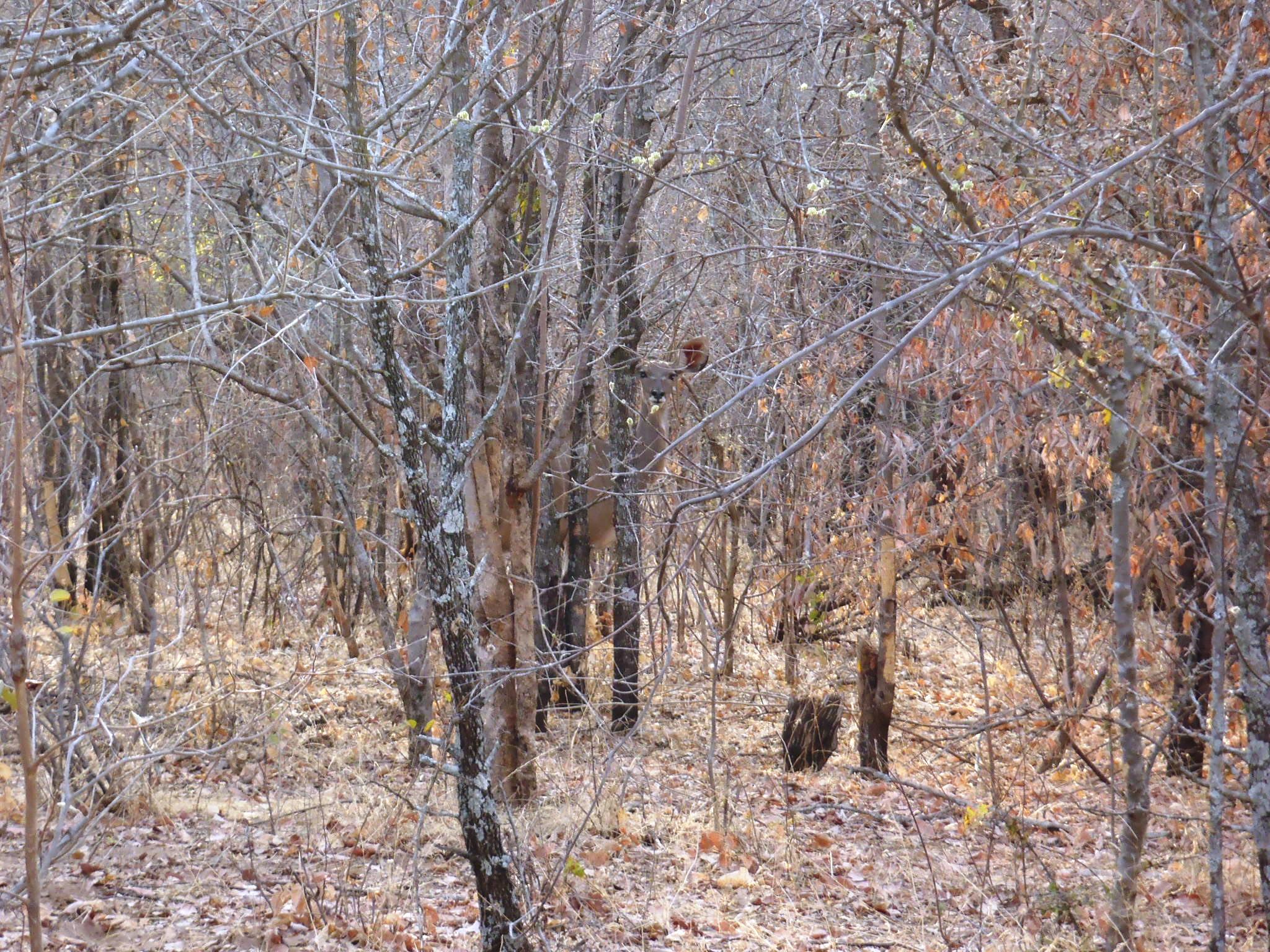 KuduKamoflage.JPG